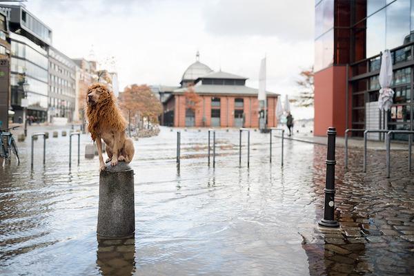 ライオン…の格好をしたわんこが街をさまよい歩く!【犬画像】 (3)