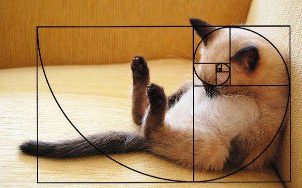 猫と黄金比の関係画像!猫の美しさの秘訣は黄金比にあり (4)