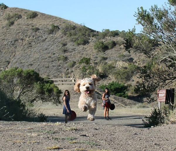 遠近感と錯覚の関係で超巨大に見える犬画像 (1)