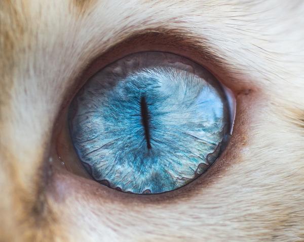 まさにキャッツアイ!綺麗な猫の瞳を撮影した画像16枚 (6)