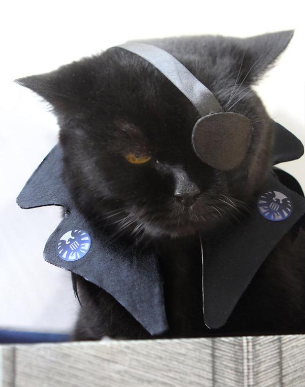 コスプレ猫!ハロウィンだし仮装した猫画像 (7)