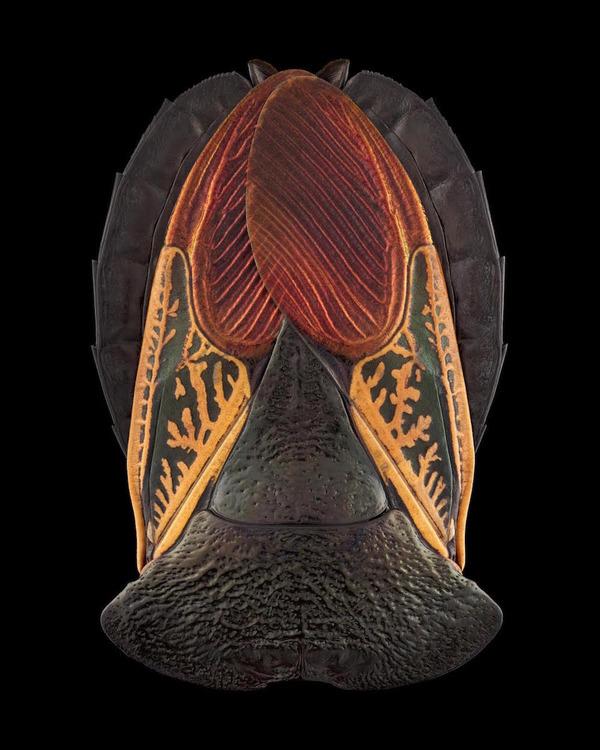 マクロ撮影された昆虫の外観がカラフル美しい (5)