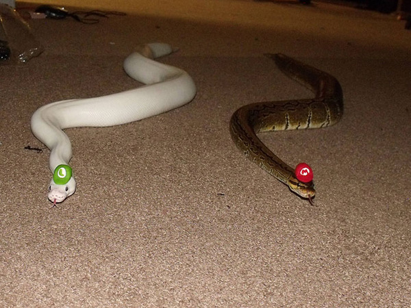 なんだこれカワイイぞ!帽子を被ったヘビ画像特集 (3)