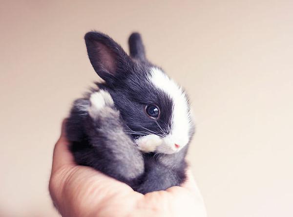 超ふわふわ!モフモフで愛らしいウサギの画像20枚 (5)