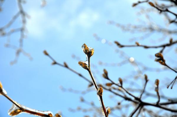 氷霧の後の花3