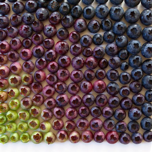 果物のカラフルなグラデーション アート写真 Brittany Wright 5