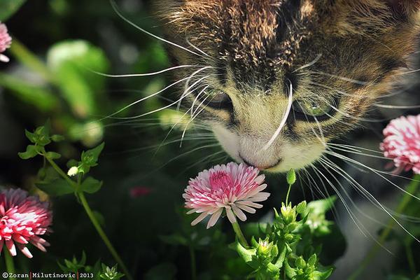 くんくん良い香り。花の匂いを嗅ぐ動物たちの画像 (48)