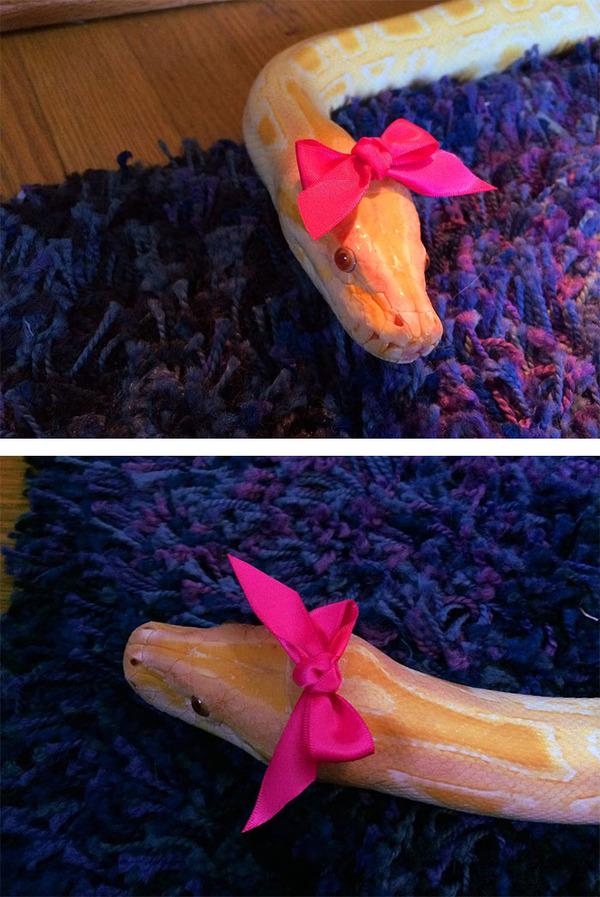 なんだこれカワイイぞ!帽子を被ったヘビ画像特集 (25)