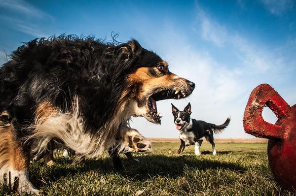 遠近感と錯覚の関係で超巨大に見える犬画像 (18)