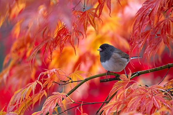 紅葉や秋の森の中を楽しむ動物たちの画像 (26)
