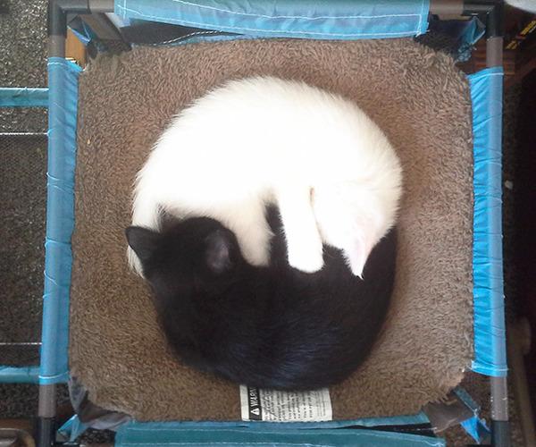 黒猫と白猫どっちが好き?どっちも可愛すぎ【猫画像】 (15)