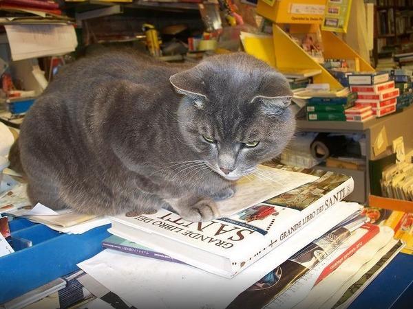 猫の本屋 2