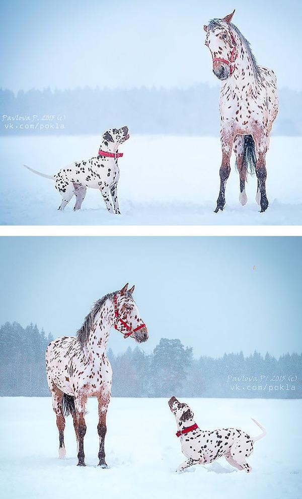 種が違うけど似てる動物たちの画像 (1)