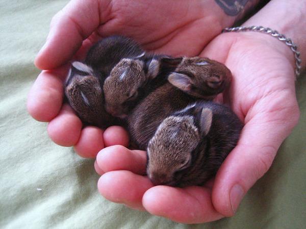 超ふわふわ!モフモフで愛らしいウサギの画像20枚 (6)