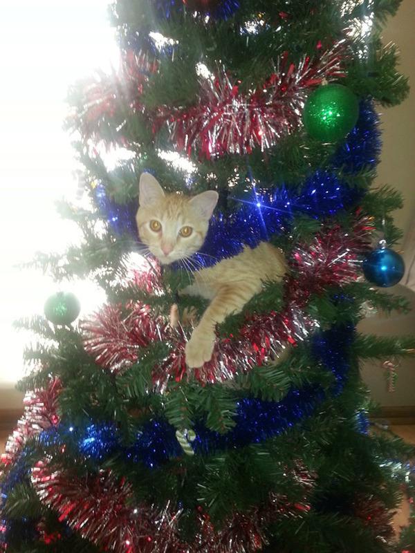 猫、あらぶる!クリスマスツリーに登る猫画像 (5)