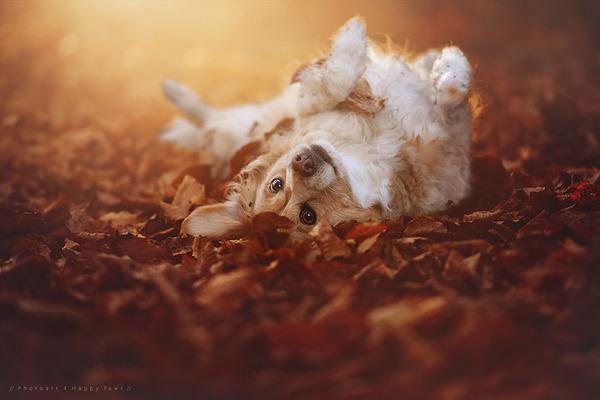 秋が来た!紅葉と遊ぶ犬画像 (8)