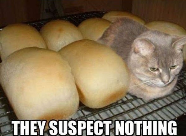 パンと並ぶ猫