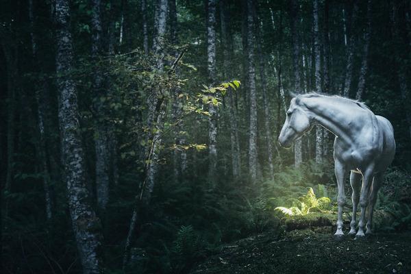野生の馬の写真 (6)