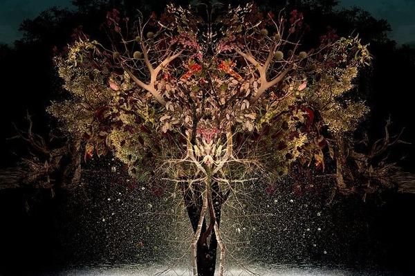 木々や花々を組み合わせて作られたコラージュ画像 (1)