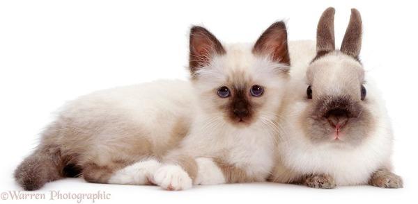 似てる!親が違うのにそっくりな動物画像30枚 (2)