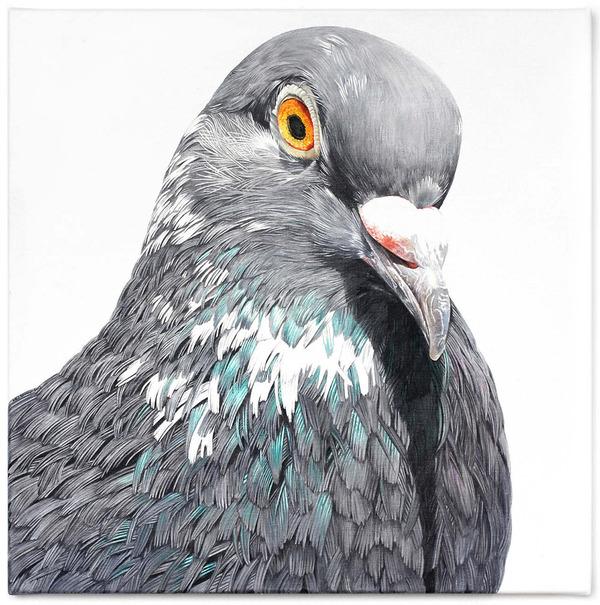 美しい鳩の油絵!卵から孵化して家族となった鳩 (6)