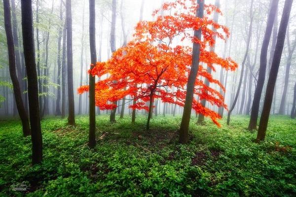 秋といえば紅葉や落葉の季節!美しすぎる秋の森の画像20枚 (9)
