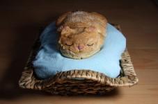 ねこパン!猫の形をしたパンがこんがり可愛い