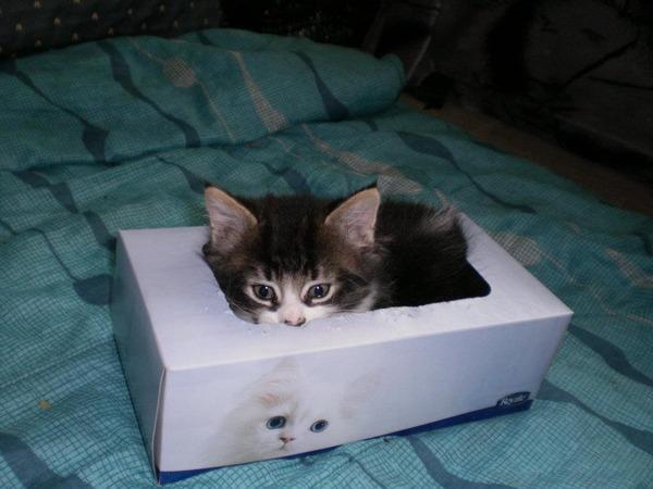 ジャストフィット猫 13