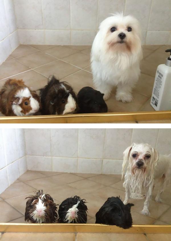 もふもふな動物たちがお風呂で変貌する…!【犬猫画像】 (4)