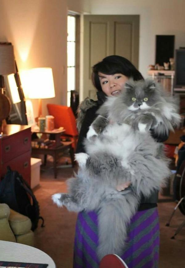 とても大きい猫の画像 33