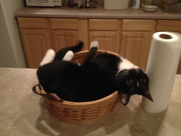 ジャストフィット猫 8