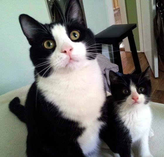 大人猫と子供猫の仲良し画像 (13)