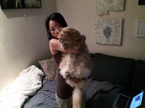 でかすぎる!大型のイエネコ長毛種メインクーン画像【猫】 (15)