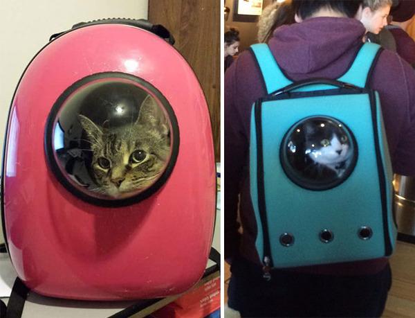 一緒に宇宙行っちゃう?宇宙飛行士みたいな猫用バックパック! (1)