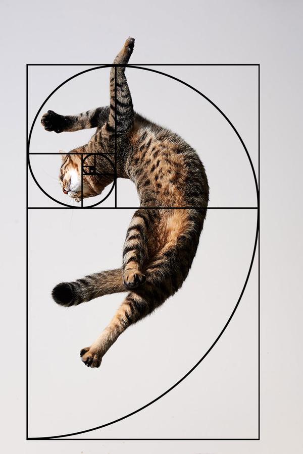 猫と黄金比の関係画像!猫の美しさの秘訣は黄金比にあり (20)