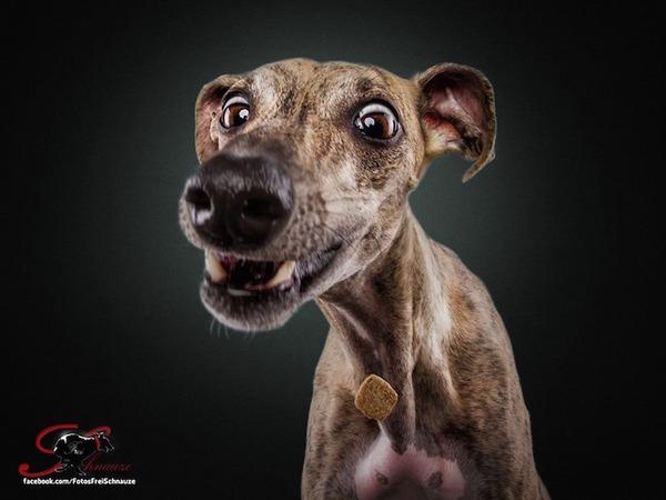 ハングリー精神!犬が獲物を食らう瞬間の静止画像がヤバイ (11)