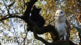 ズッ友だよ!!黒猫とフクロウの友情物語 FUM&GEBRA