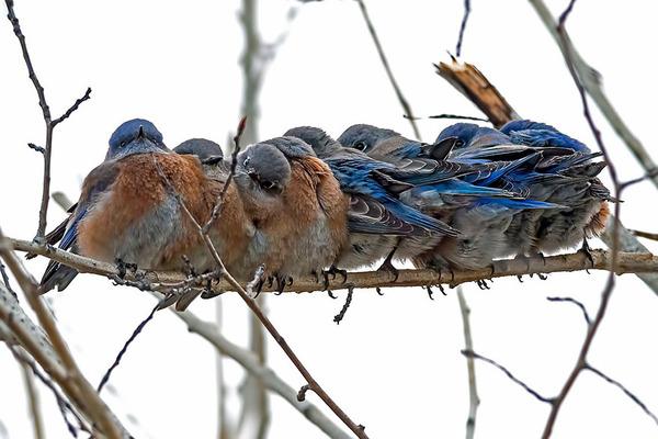 小鳥が温まる為に皆で寄り添っている可愛い画像 (16)