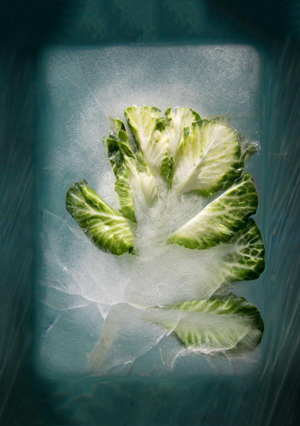 絵画的な美しさ。氷漬けになった花々の写真シリーズ (11)