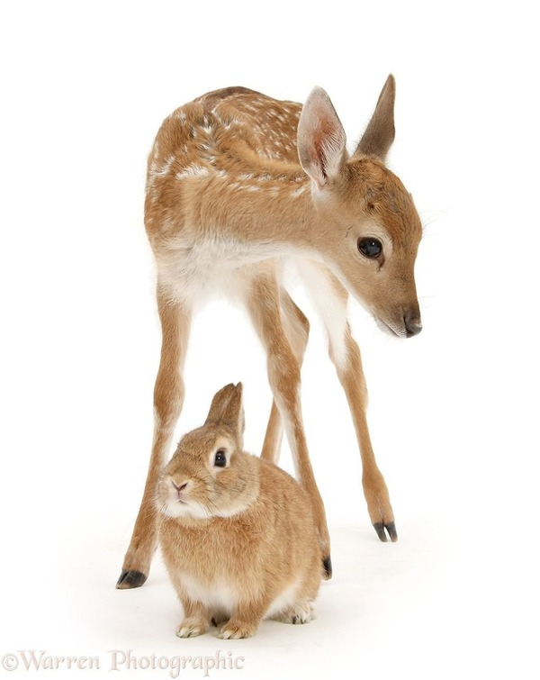 似てる!親が違うのにそっくりな動物画像30枚 (13)