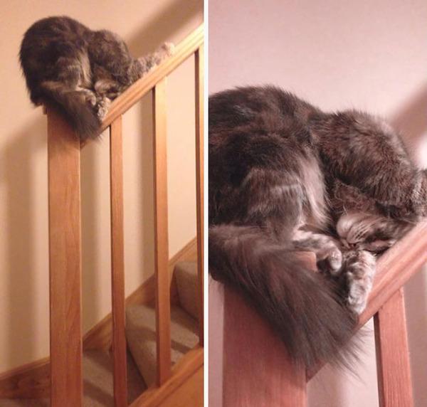 寝てるだけなのに…かわいすぎる猫たちの画像 (1)