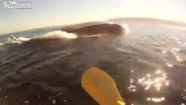 至近距離のカヤックでシロナガスクジラと出会う!