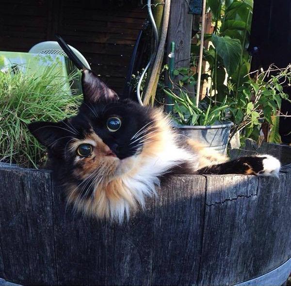 盲目の迷い猫。珍しい毛色のキメラネコが愛を知る (10)