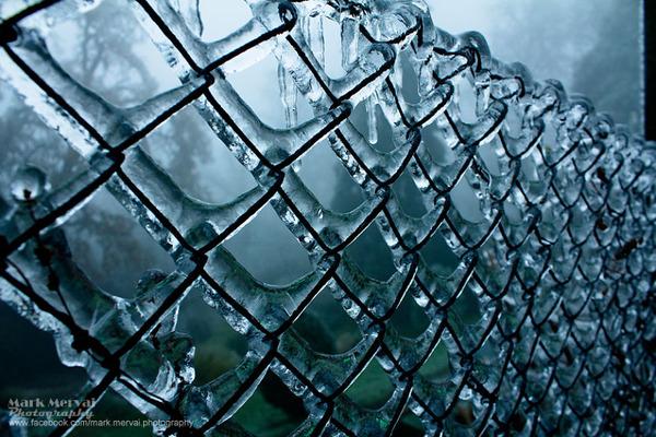 凍ったフェンス