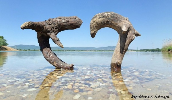 歪な形がゾンビっぽい!ドナウ川の流木で作られた彫刻作品 (7)