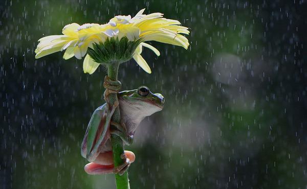 自然の傘を差す動物 7