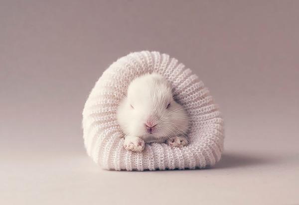 この動物なんだ?生まれたてのモフモフ哺乳類!  (11)