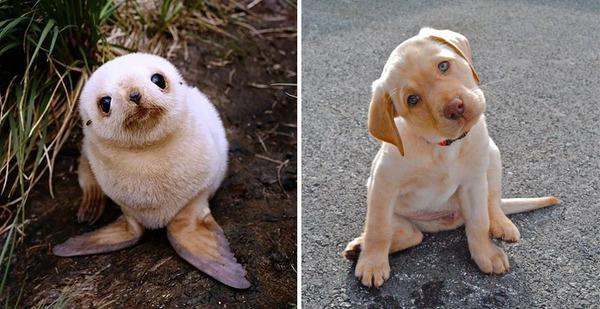 アザラシって犬そっくりじゃね?犬とアザラシを比較画像! (25)