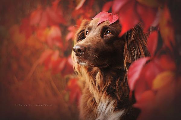 秋が来た!紅葉と遊ぶ犬画像 (10)