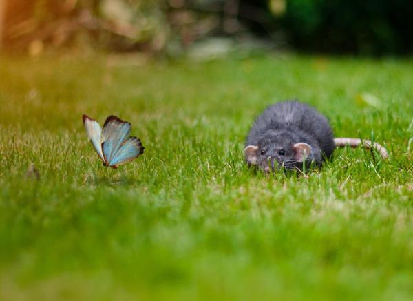 蝶とネズミ